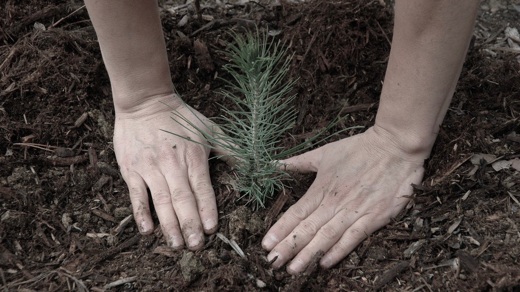 Planting seedlings; image by USFS Region 5, CC