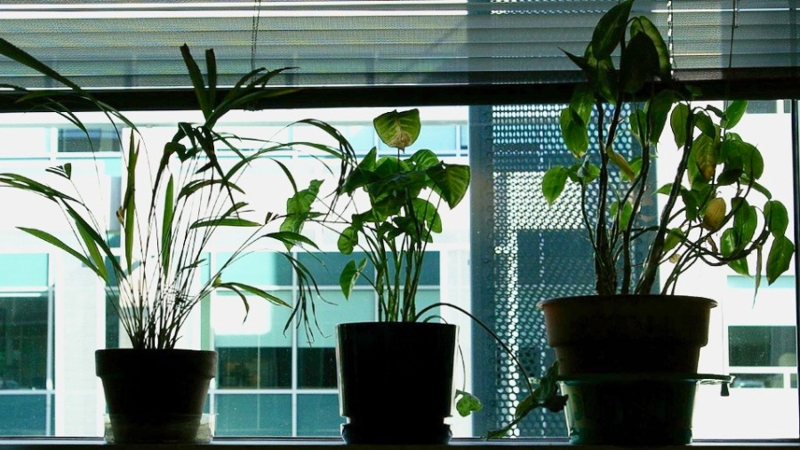 Plants on a window shelf